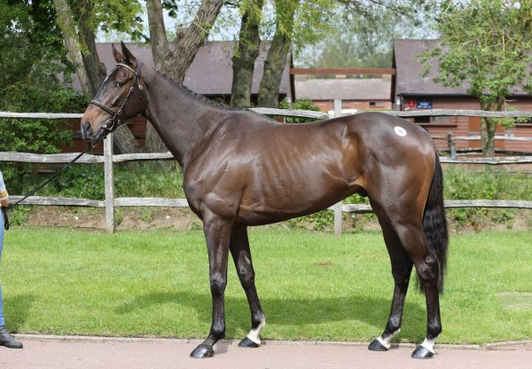 City Chief (Soldier Of Fortune) conformation shot