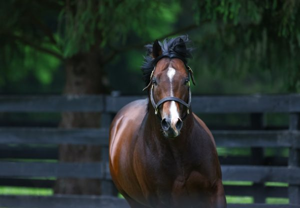 The Getaway Star (Getaway) winning the mares bumper at Cork