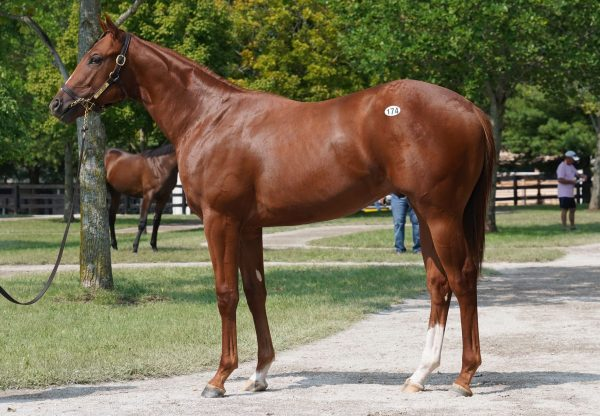 Classic Empire x Just Parker $325,000 Fasig Tipton