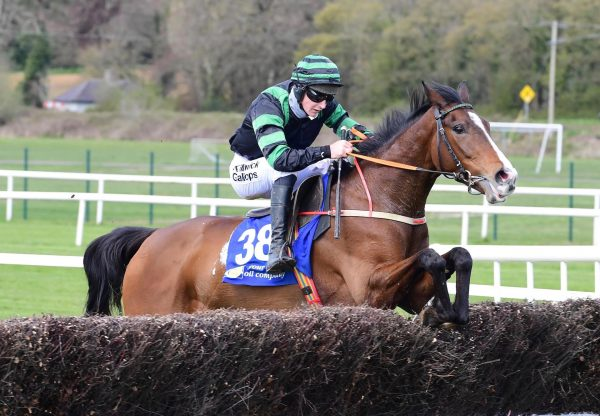Cool Survivor Wins On Debut At Cork 1