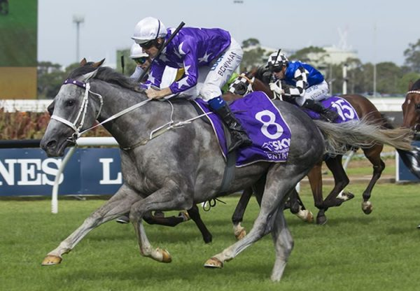 D'Argento (So You Think) winning the G1 Rosehill Guineas at Rosehill