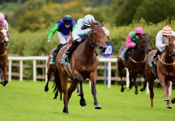 Dense Star (Starspangledbanner) Wins At Navan