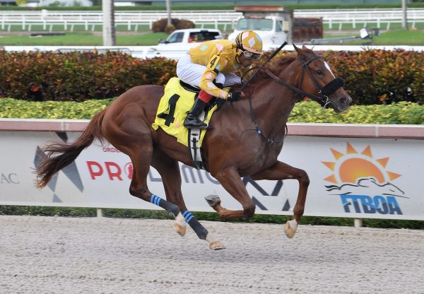 Diamond Wow (Lookin At Lucky) Wins Our Dear Peggy Stakes at Gulfstream Park