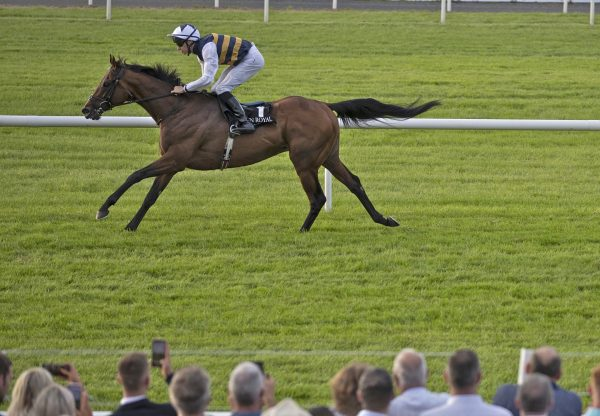 Downdraft (Camelot) winning the Listed Her Majesty's Plate at Down Royal