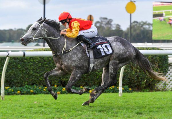 Duchess Adele (Adelaide) winning at Warwick Farm