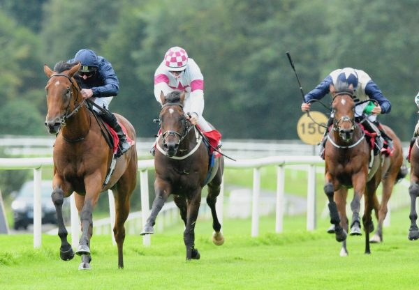 Gleno (Ask) on the way to the start before winning a bumper at Ayr