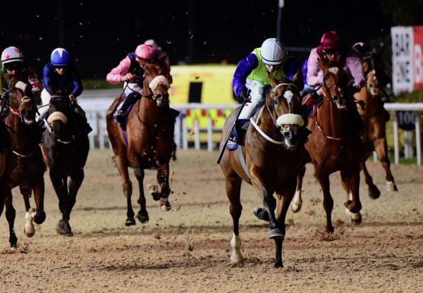 Eagles Flight (Gleneagles) Wins His Maiden At Dundalk