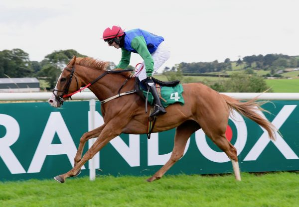 Eco Pete (Leading Light) Wins The Bumper At Downpatrick