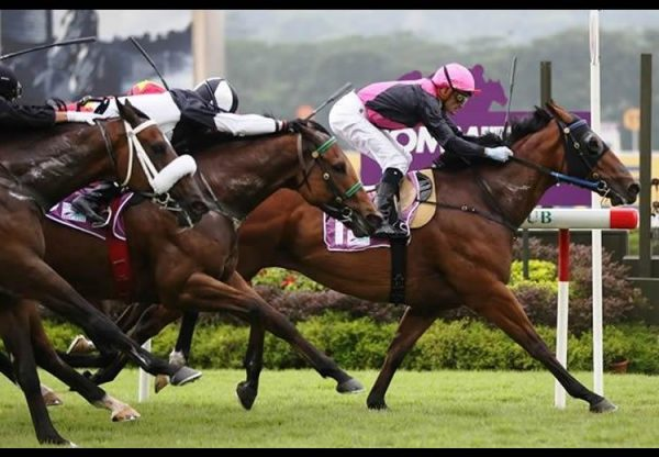 Emperor Max (Holy Roman Emperor) winning the Sng G3 Garden City Trophy in Singapore