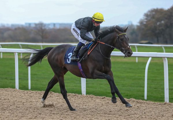 English King Wins His Maiden