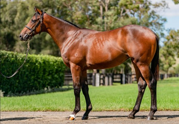 Fastnet Rock X Rostova filly conformation shot