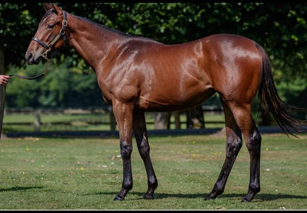 American Pharoah ex Mabre Rose yearling filly selling at Arqana for €850,000