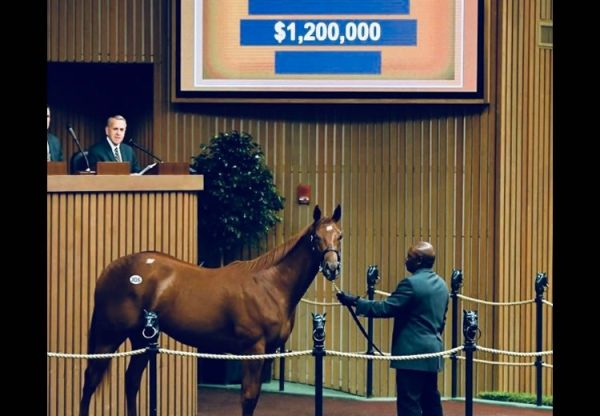 American Pharoah ex Pretty N Smart yearling filly selling for $1.2 million at Keeneland
