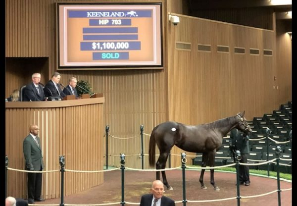 Uncle Mo ex Bizzy Caroline yearling filly selling for $1.1 million