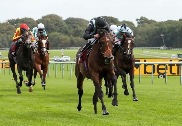 Fancy Man (Pride Of Dubai) winning the Listed Ascendant Stakes at Haydock