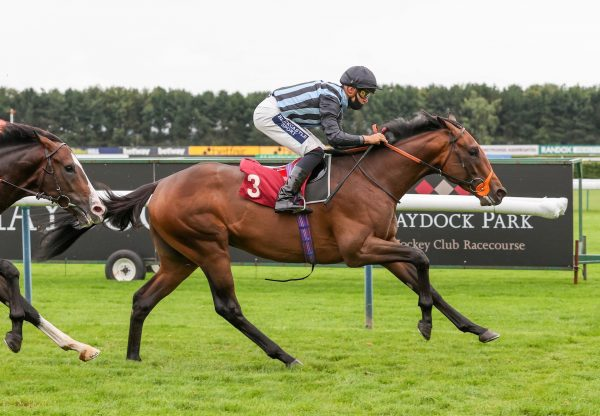 Fancy Man (Pride Of Dubai) Wins On Debut at Haydock
