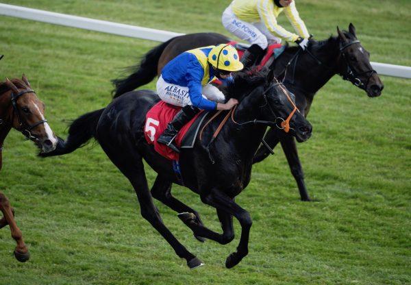 Tonkin (Camelot) winning a maiden at Listowel