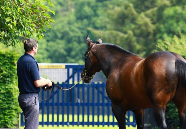 Fastnet Rock At Stables
