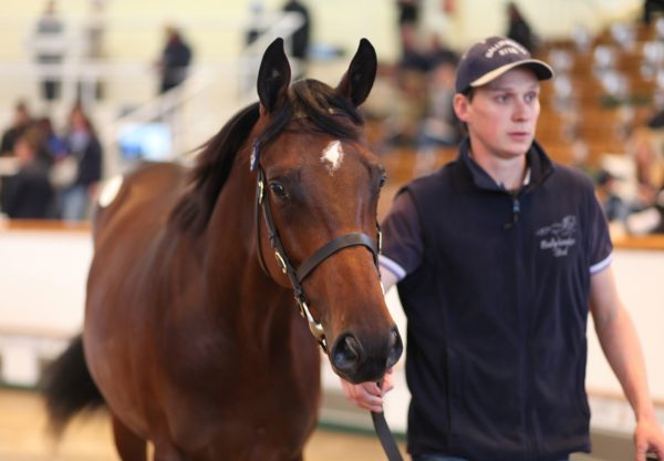 Fastnet Rock Colt Out Of Pride