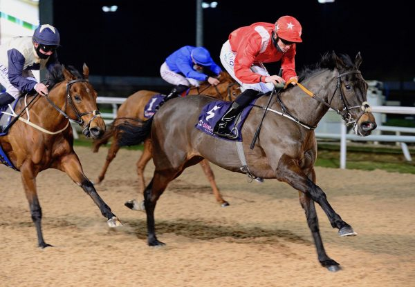 Flirting Bridge (Camelot) Wins The Fillies Maiden At Dundalk