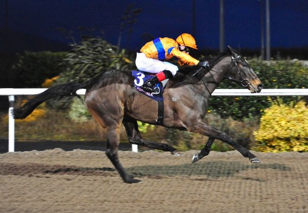 Flower Garland Wins At Dundalk