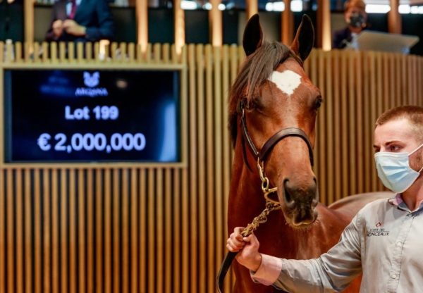 Galileo Colt x Prudenzia Arqana Select 2020