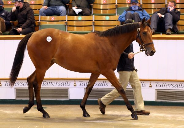 Galileo Filly Ex Shastye Tops Tattersalls Book 1