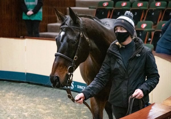 Apples jade sells in foal to Walk In The Park at Goffs for €530,000