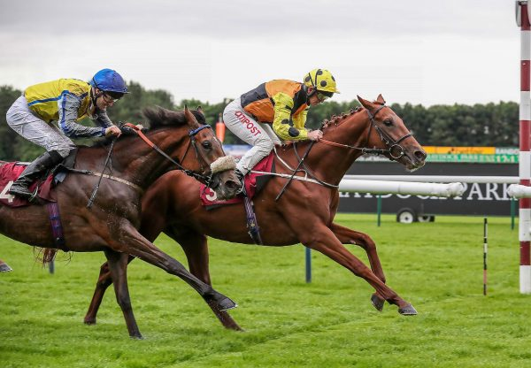 Cougar Mountain (Fastnet Rock) winning the G3 Desmond Stakes at Leopardstown