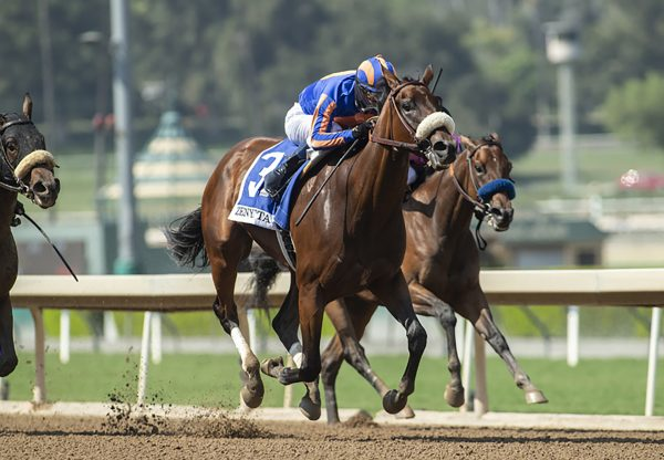 Harvest Moon Uncle Mo Wins Gr 2 Zenyatta Stakes