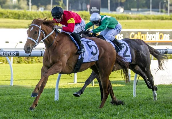I Am Serious (Choisir) winning the G3 ATC Angst Stakes at Randwick