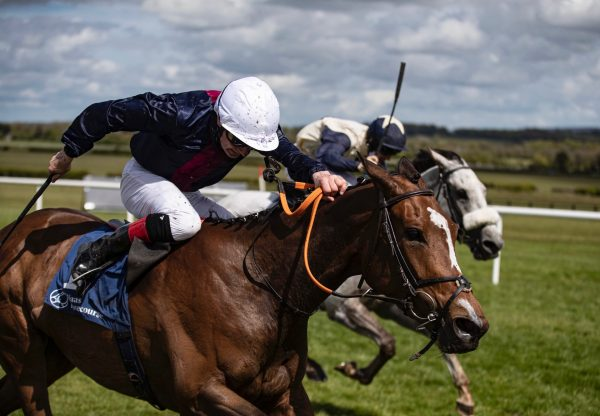 Insinuendo Wins The Group 3 Blue Wind Stakes At Naas 1