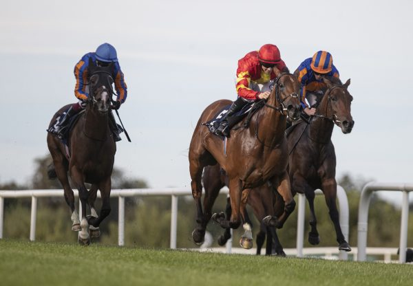 Iridessa (Ruler Of The World) wins the Gr.1 Matron Stakes at Leopardstown