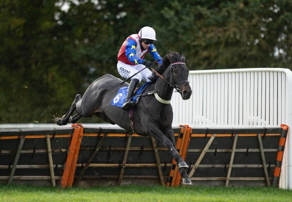 Isolate (Maxios) Wins The Novice Hurdle At Taunton