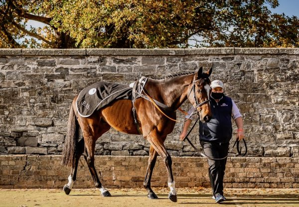 Jonbon (Walk In The Park) Breaks Records At The Goffs Uk November Sale