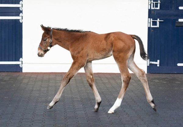 Justify Filly Ex Diamondsandrubies