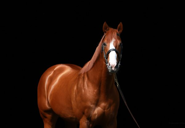 Justify head shot