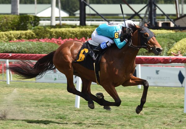 Juulstone (American Pharoah) wins maiden at Gulfstream Park
