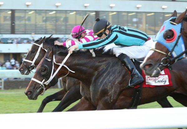 King Of Miami (American Pharoah) Mystic Lake Derby Win