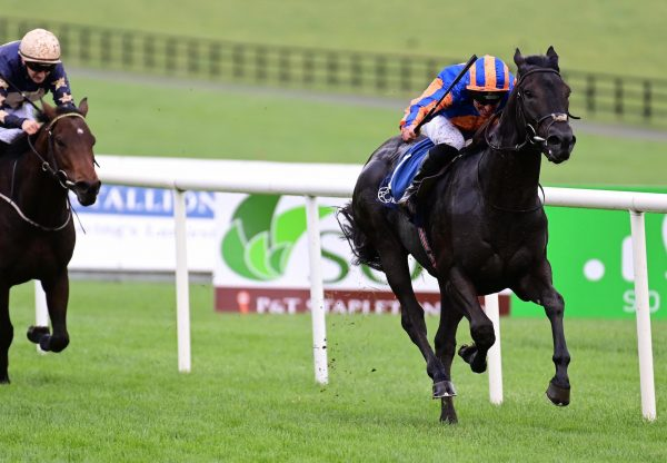 Skyace (Westerner) After Winning The Grade 1 Mares Novice Championship Hurdle at Fairyhouse