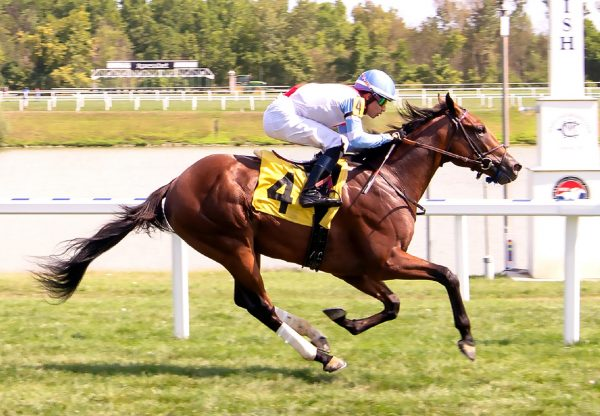 King Of Egypt (American Pharoah) winning a MSW at Laurel Park