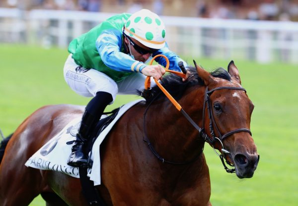 Kings Harlequin (Camelot) Wins The Listed Prix Roland De Chambure at Longchamp