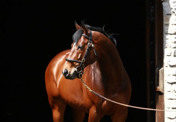 Choisir leaving the stallion barn