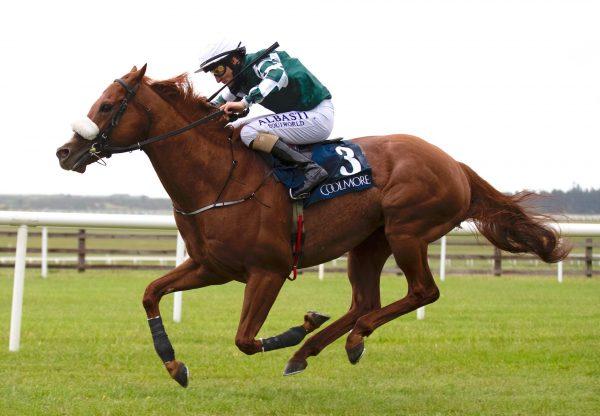 Leo De Fury (Australia) Wins The Gr.2 Mooresbridge Stakes Impressively at the Curragh