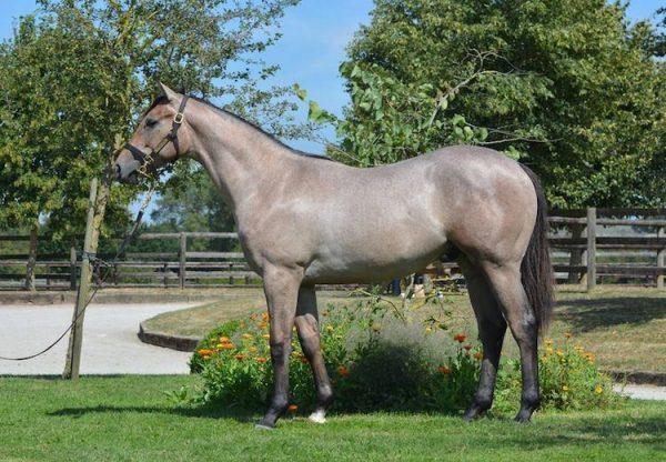 J Wonder (Footstepsinthesand) Winning The Fred Darling Stakes At Newbury