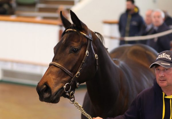 Lot 79 By No Nay Never Sells For 230K At The Tattersalls Craven Sale