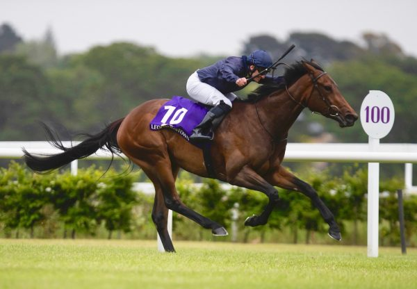 Love Locket (No Nay Never) Wins The Group 3 Leopardstown Fillies Trial Stakes