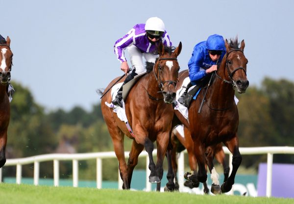 Magical (Galileo) Wins The Gr.1 Irish Champion Stakes at Leopardstown For A Second Time
