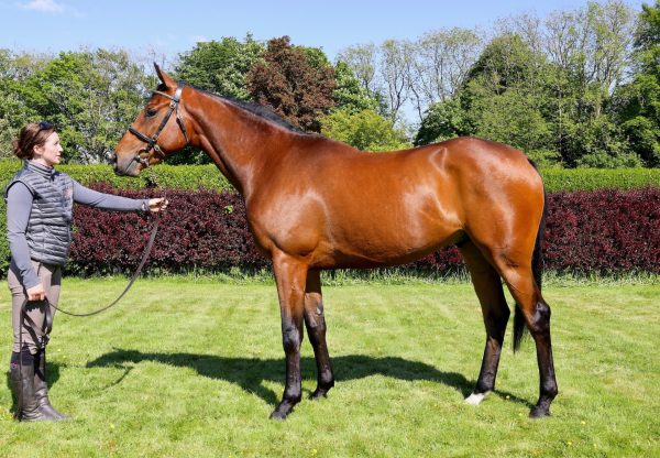 Mahler X Pretty as a Picture Lot 171 Goffs Land Rover conformation shot