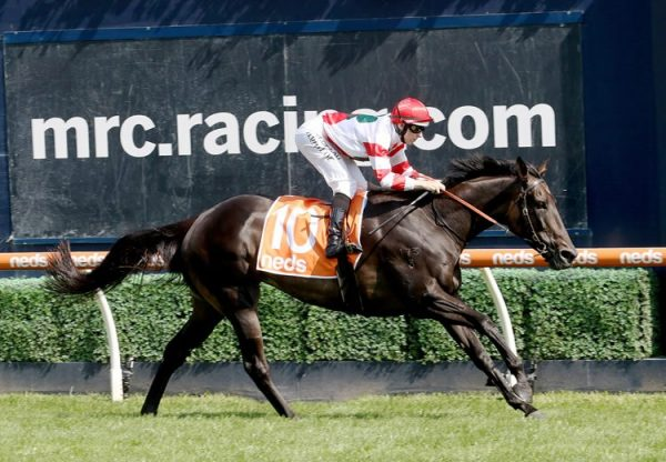 Miss Siska (So You Think) winning the Gr.3 Carlyon Cup at Caulfield